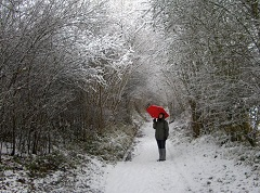 Winter walking in a snow-clad Surrey